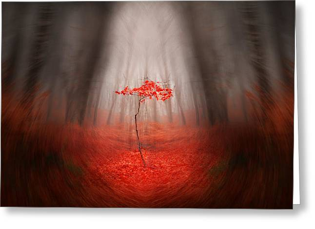 Foggy Day Greeting Cards - The Red Tree Greeting Card by Toma Bonciu