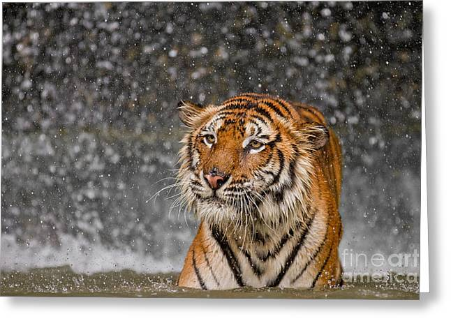 Princess Grace Greeting Cards - The Residual Greeting Card by Ashley Vincent