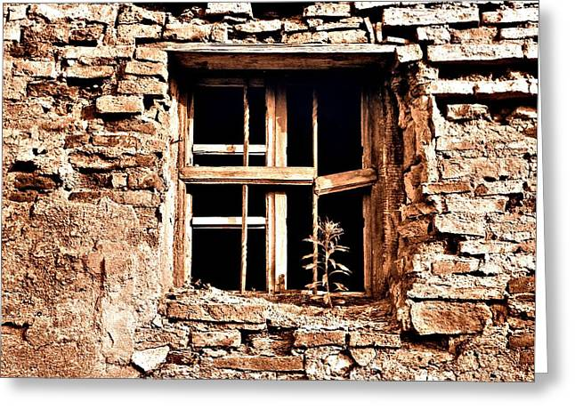 Window Of Life Greeting Cards - The Resilience of Life Greeting Card by Ion vincent DAnu