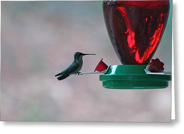 Migrating Hummingbird Greeting Cards - The Rest Greeting Card by Rod Mays