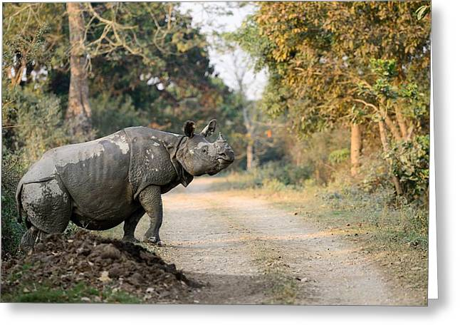 One Horned Rhino Greeting Cards - The Rhino at Kaziranga Greeting Card by Fotosas Photography