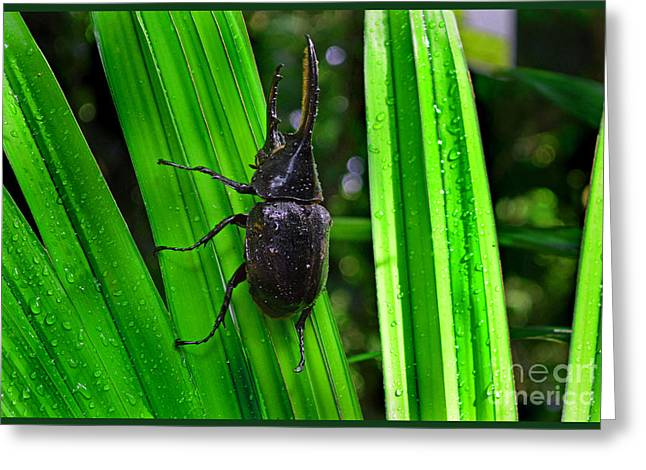 One Horned Rhino Greeting Cards - The Rhinoceros Beetle Greeting Card by Gary Keesler