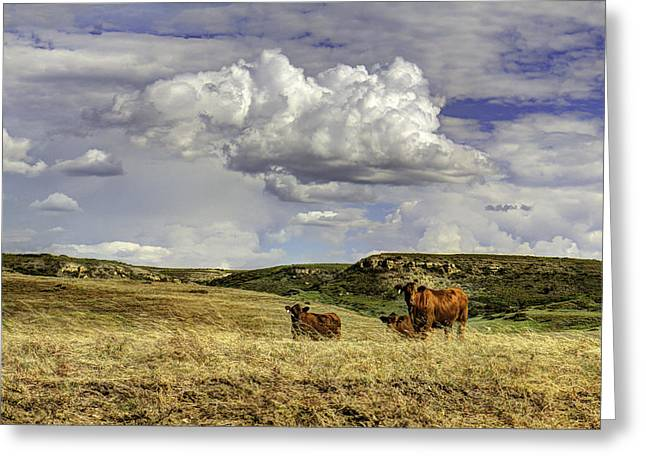Angus Steer Greeting Cards - The Right Breed Greeting Card by Michael Gross