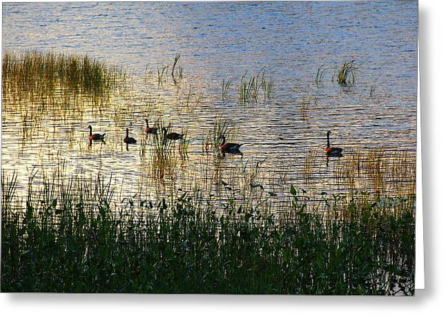 Water Fowl Greeting Cards - The Right Light Greeting Card by Debbie Oppermann