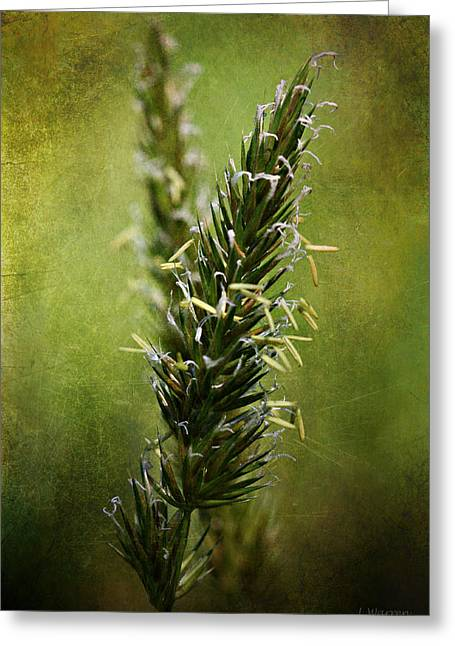 Green Blade Of Grass Greeting Cards - The Rise Greeting Card by Lyndsey Warren
