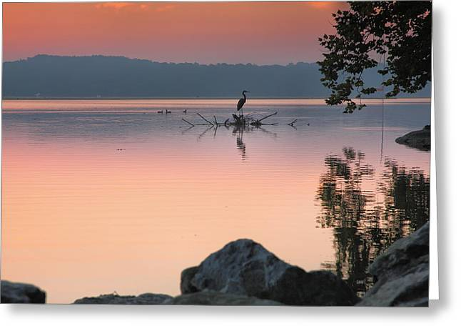 Wildlife Refuge. Greeting Cards - The River At Sunrise Greeting Card by Steven Ainsworth