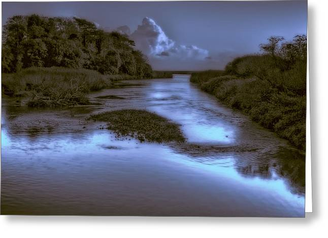 Ocean Vista Greeting Cards - The River Otter Greeting Card by Curtis Radclyffe