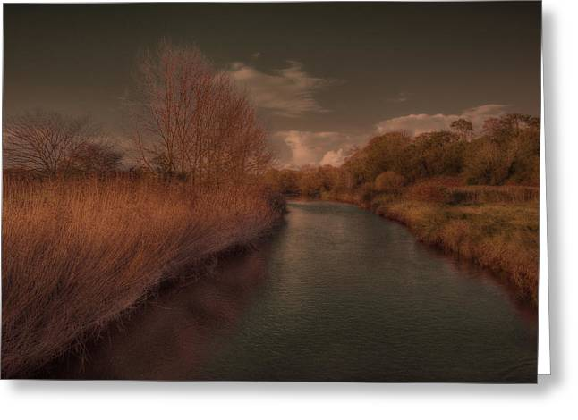 Prospects Greeting Cards - The River Otter II Greeting Card by Curtis Radclyffe
