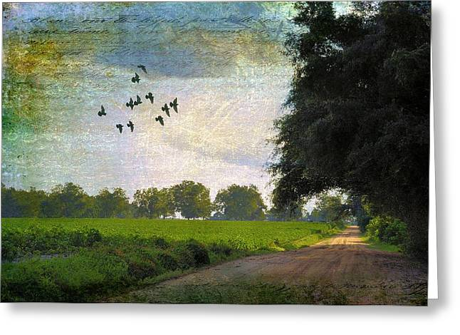 """cotton Field"" Greeting Cards - The Road Home Greeting Card by Jan Amiss Photography"