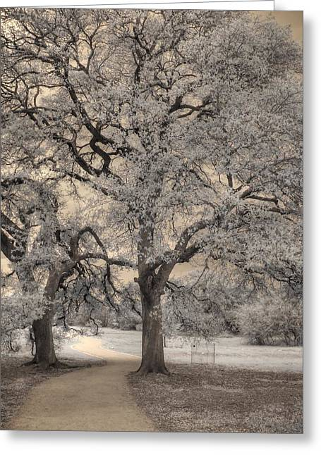 Infared Photography Greeting Cards - The Road Less Traveled Greeting Card by Jane Linders