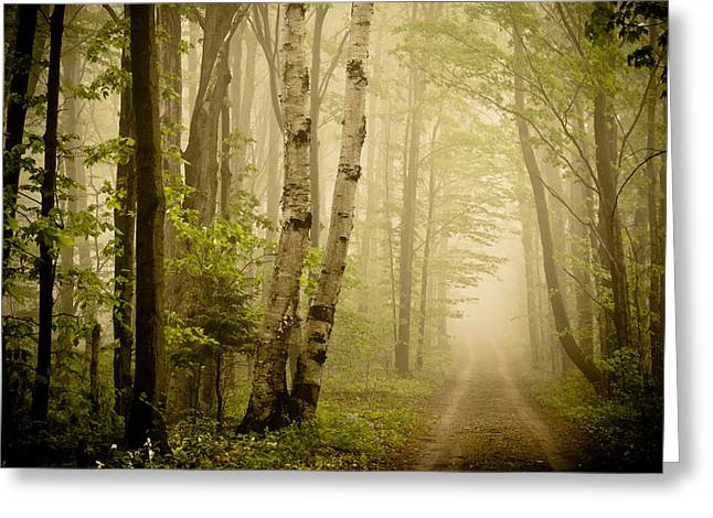 Joy Stclaire Greeting Cards - The Road Through the Woods Greeting Card by Joy StClaire