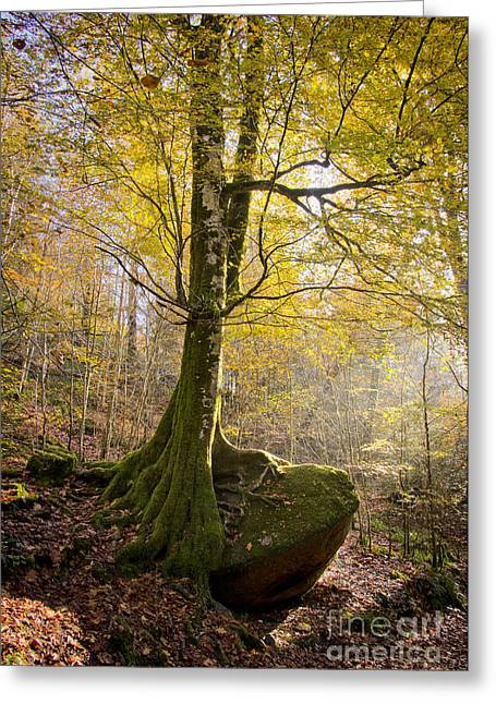 Tree Roots Greeting Cards - The Rock Tree Greeting Card by Sophie De Roumanie