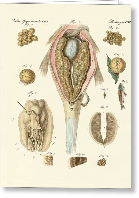 Rogen Greeting Cards - The roe or ovarium of the carps and painters mussel or the evo Greeting Card by Splendid Art Prints