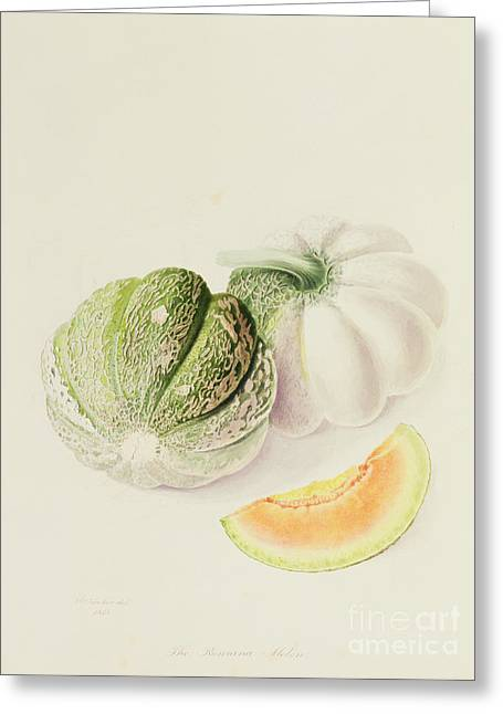Melon Paintings Greeting Cards - The Romana Melon Greeting Card by William Hooker