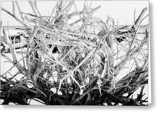 Tree Roots Greeting Cards - The Roots in Black and White Greeting Card by Lisa Russo