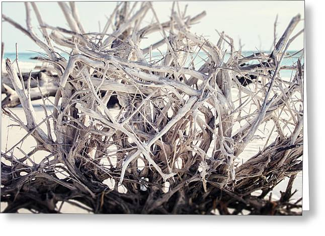 Tree Roots Photographs Greeting Cards - The Roots Greeting Card by Lisa Russo