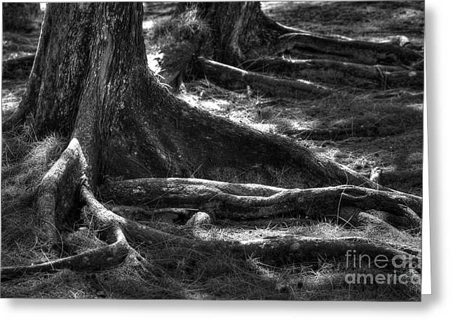 Tree Roots Greeting Cards - The Roots Greeting Card by Sophie Vigneault