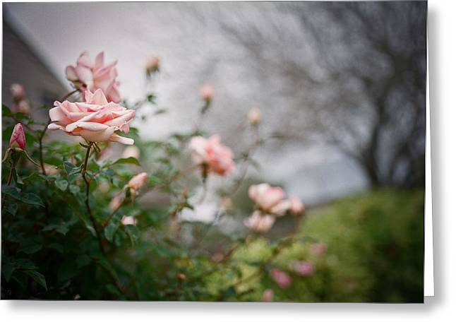Medium Pink Greeting Cards - The Rose Garden Greeting Card by Linda Unger