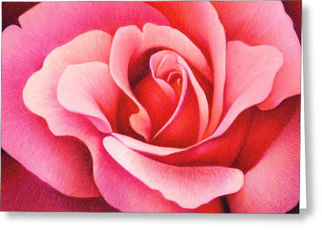 For Sale Drawings Greeting Cards - The Rose Greeting Card by Natasha Denger