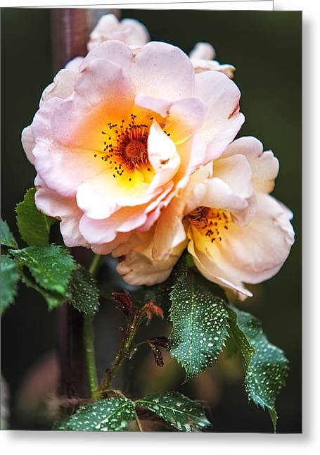 Peaceful Scene Greeting Cards - The Rose with Your Name. Park of De Haar Castle Greeting Card by Jenny Rainbow
