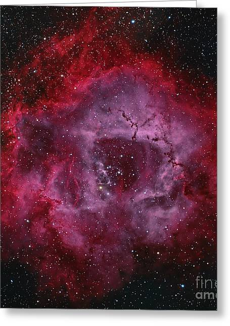 Interstellar Space Greeting Cards - The Rosette Nebula Greeting Card by Michael Miller