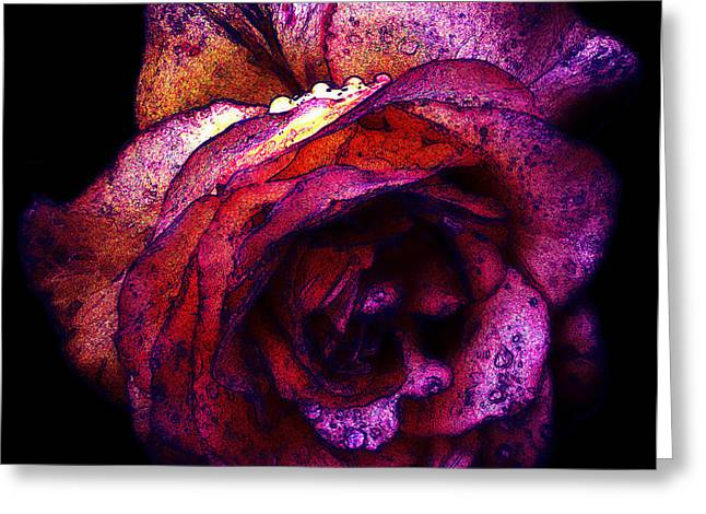 The Royal Rose Greeting Card by Stephanie Hollingsworth
