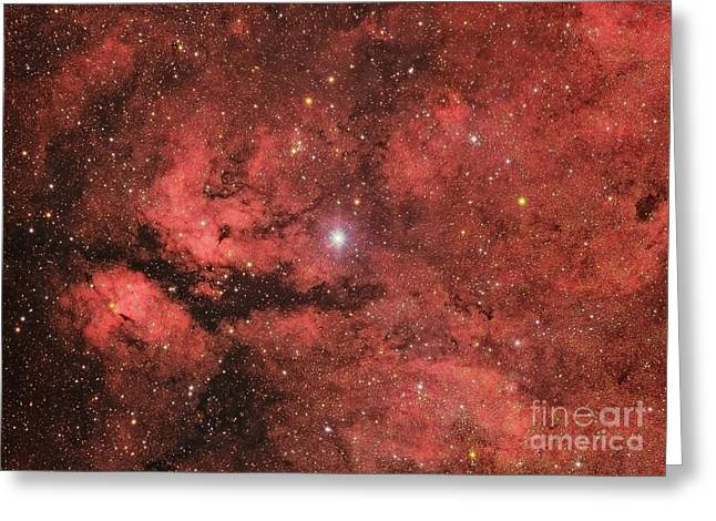 Twinkle Greeting Cards - The Sadr Region In The Constellation Greeting Card by Roberto Colombari