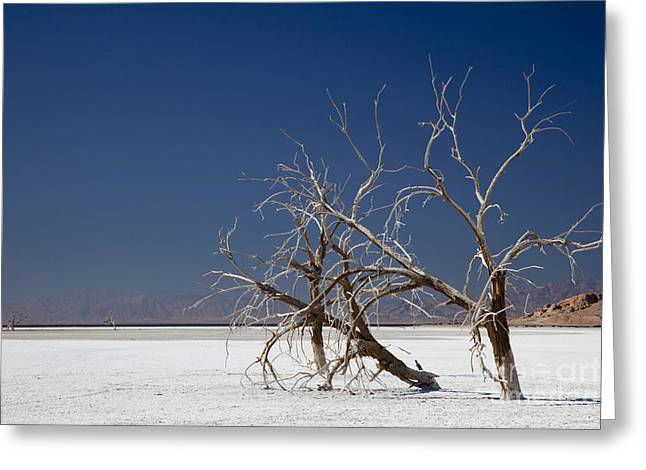 Sonny Bono Greeting Cards - The Salton Sea Greeting Card by Jim West