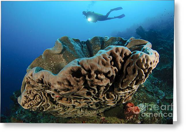 Gorontalo Greeting Cards - The Salvador Dali Sponge With Intricate Greeting Card by Steve Jones