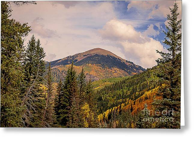 Original Photographs Greeting Cards - The San Juan National Forest Greeting Card by Janice Rae Pariza