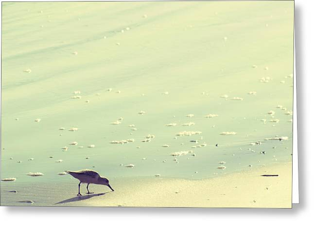 Sandpipers Greeting Cards - The Sandpiper Greeting Card by Amy Tyler