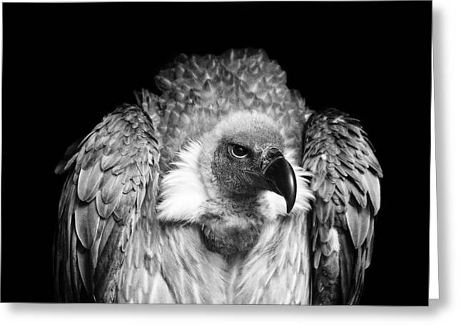 Bird Photography Greeting Cards - The Scavenger Greeting Card by Chris Whittle