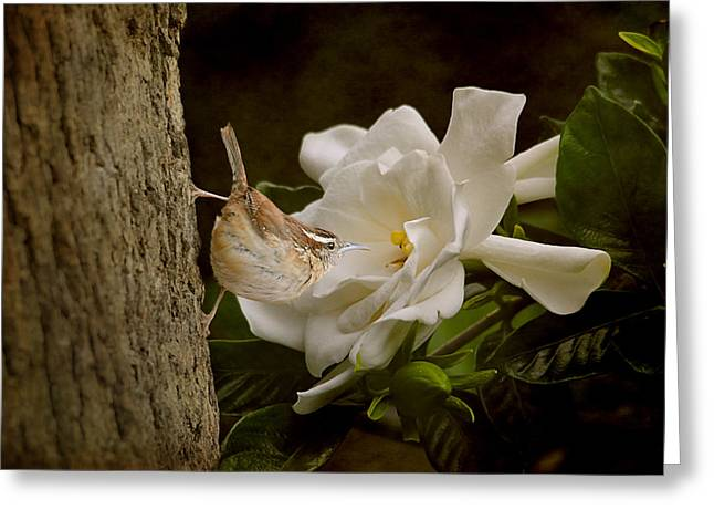 Birds And Flowers Greeting Cards - The Scent of the Gardenia Greeting Card by Jai Johnson