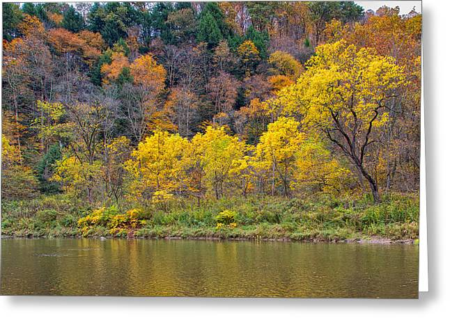 Fishing Creek Greeting Cards - The Season of Yellow Leaves Greeting Card by John Bailey