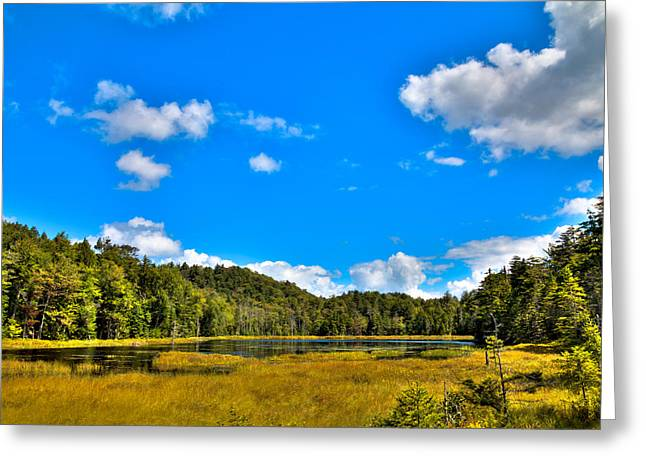 Lush Green Greeting Cards - The Secluded Fly Pond Greeting Card by David Patterson