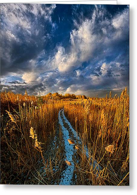 Bluesky Greeting Cards - The Secret Path Greeting Card by Phil Koch
