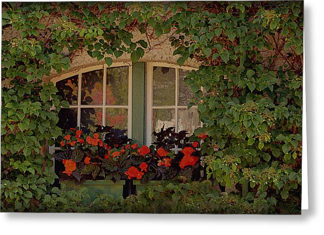 Red Geraniums Greeting Cards - The Secret Window Greeting Card by Maria Angelica Maira
