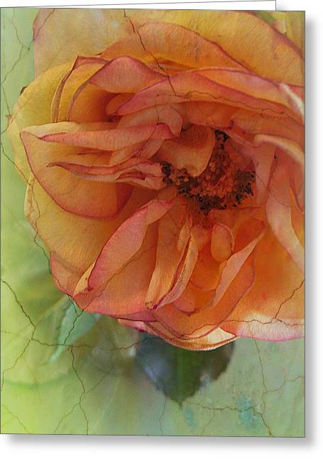Design With Photography Greeting Cards - The Sensitive One Greeting Card by Shirley Sirois