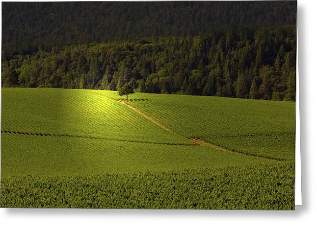 Grape Vineyard Greeting Cards - The Sentinel  Greeting Card by Kandy Hurley