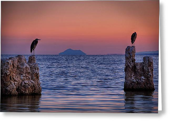 Heron.birds Greeting Cards - The Sentinels  Greeting Card by Peter Tellone