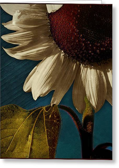 Olive Green Greeting Cards - Sunflower Greeting Card by Bernie  Lee
