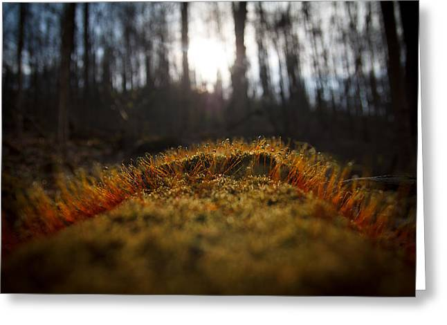 Spores Greeting Cards - The setting sun Greeting Card by Shane Holsclaw