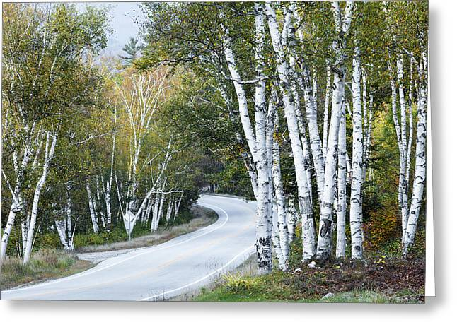 The Shelburne Birches Greeting Card by Harry H Hicklin