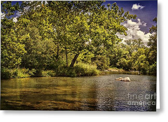 Tamyra Ayles Greeting Cards - The Shores of Blue River Greeting Card by Tamyra Ayles