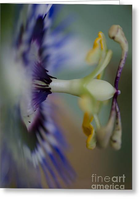 Passion Fruit Greeting Cards - The side of Passion Greeting Card by Nicole Markmann Nelson