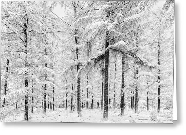Gelderland Greeting Cards - The Silent Trees Greeting Card by Martin Bergsma