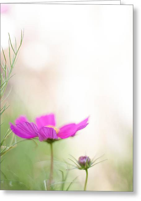 Artistic Photography Greeting Cards - The Simple Things Greeting Card by Constance Fein Harding