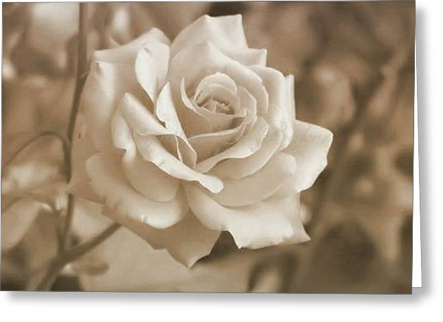 Rose Pleasure Greeting Cards - The Simplicity Of A Rose Greeting Card by Cynthia Baker