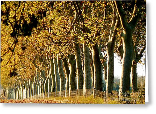 Wine Tour Greeting Cards - The Sisters Greeting Card by France  Art