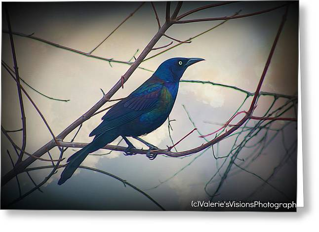 Stein Greeting Cards - The skinny Grackle Greeting Card by Valerie Stein